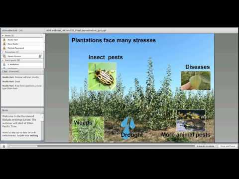 Trees of the Future – Genetic Engineering as a Tool for Improving Feedstock