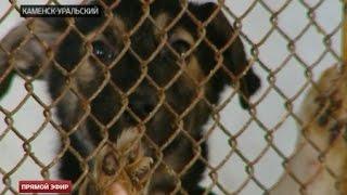 Бездомные животные Каменска-Уральского угодили под домашний арест