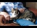 【猫 感動】深い絆で結ばれたおばあちゃんと猫。14年間いっしょに暮らし、同じ日に天国へ…