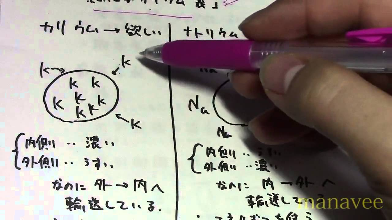 能動輸送と受動輸送-11 - YouTube