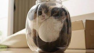 5 доказательств того, что кошки — это пришельцы