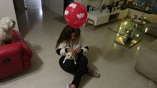 My Dogs Reaction to Gas Balloon   Mumbai Seafood Festival   SS vlogs : )