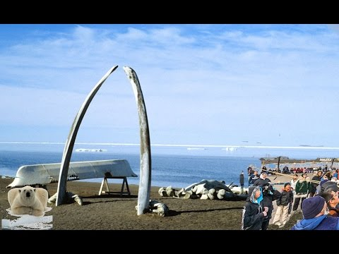 barrow-alaska-weather-&-beach-and-nature-and-snow
