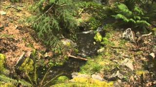 Splendor of the Siskiyou Mountain Wilderness - Marble Halls of Oregon