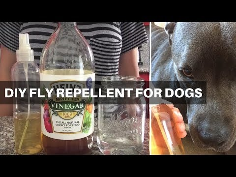 How To Make Natural Fly Repellent For Dogs