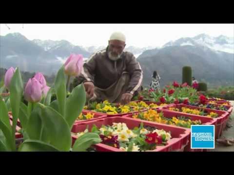 Tulip Garden 2017 Kashmir