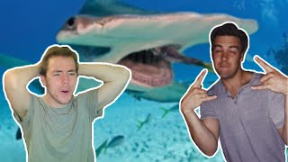 Fish Biologist reacts to Cody Ko's Shark Tier List