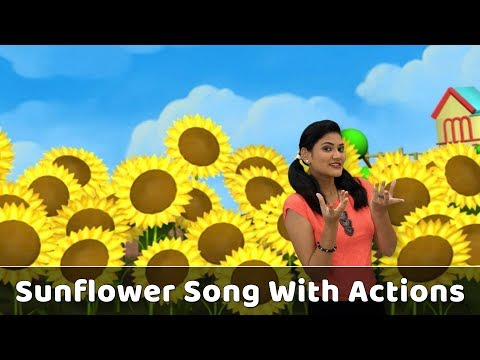 Sunflower Song With Actions | Flower Rhymes For Babies | Learn Flowers For Kids | Toddlers Songs