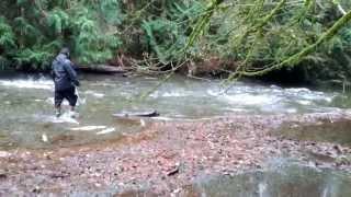 видео: Salmon Run. Нерест Кеты