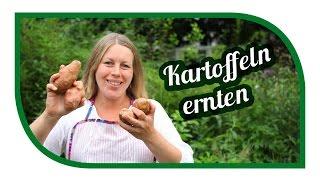 Kartoffeln anbauen 🥔 im Kübel und der Tonne 🥔 Unsere Kartoffelnsorten