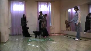 Екатеринбург Маруся метис тест на собаку терапевта пройден