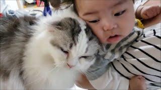 人懐っこすぎる猫もちとら、0歳児にスリスリ甘える