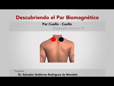Pares biomagnetico para bajar de peso