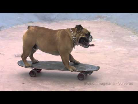 Biuf - Bulldog Skater visits skatepark 1st time