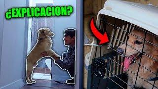 mi perro nos debe una explicacion sobre lo que paso en el aereopuerto   thedonato