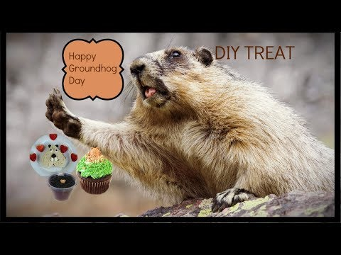 Happy Groundhog Day Treats I ByJenniferlynn