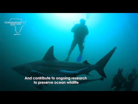 Marine conservation volunteering and diving in Mozambique