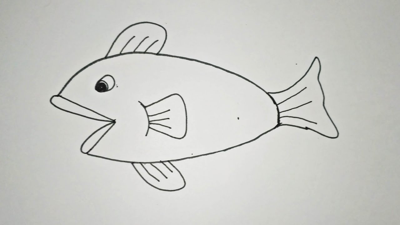 steps on how to draw a fish