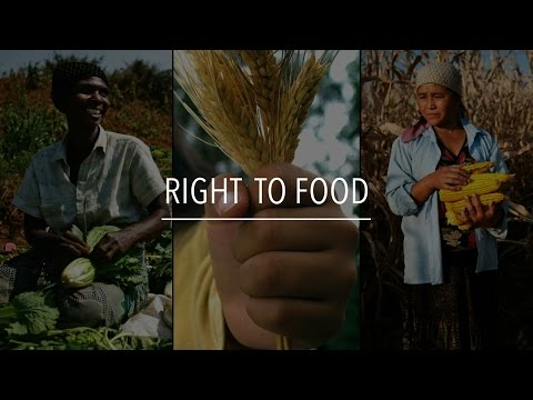 FAO Policy Series: Right to Food