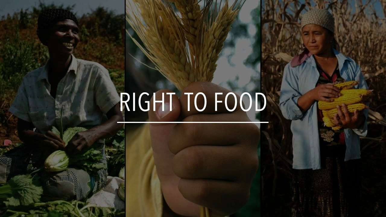 Image result for the right to food