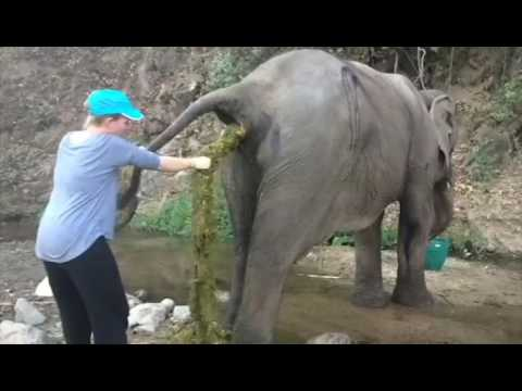 The Biggest Elephant Poop Ever! - YouTube