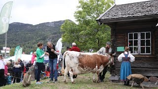 DIREKTE: Melkekonkurranse mellom Erna Solberg og Jonas Gahr Støre