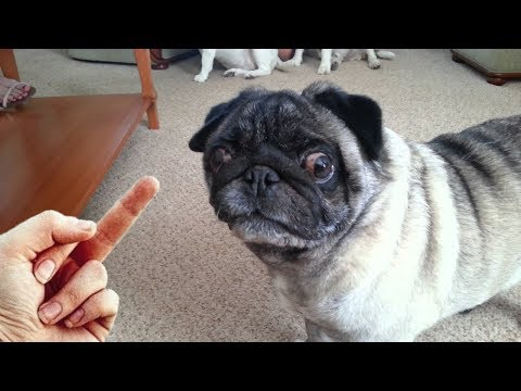 Dog Really Hates Middle Finger - Compilation NEW