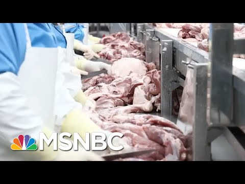 What If You Pretend COVID-19 Doesn't Exist? Look At Meatpacking Plants For Answer. | All In | MSNBC