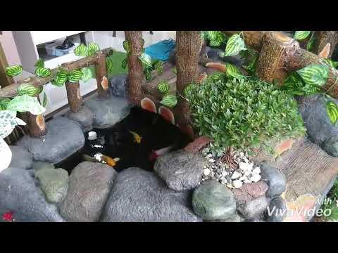 kolam koi minimalis nuansa alami - youtube