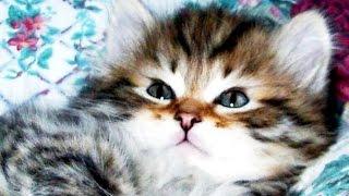 Забавы маленьких котят Покажи детям