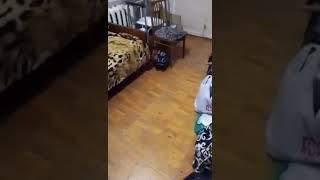 Кошка переехала в новую квартиру. Первые минуты...