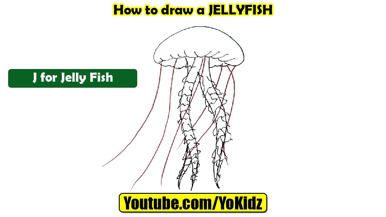 how to draw a jellyfish youtube