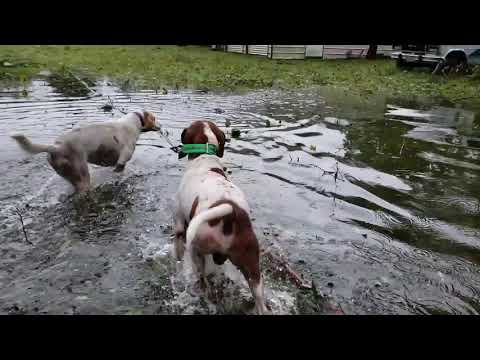 Un heroe rescata seis cans pechados durante o furacán Florence