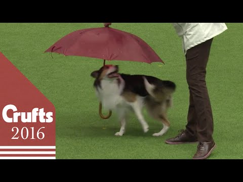 Heelwork to Music Competition Part 1   Crufts 2016