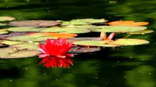 Alliyambal Kadavil - Evergreen Malayalam Song Dada Sahib HQ @MalluParadise