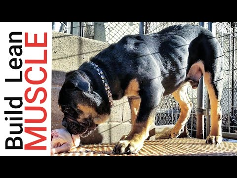 How To Build INCREDIBLE Muscle On Your Puppy With RAW Food #NaturalBodyBuilding