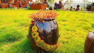 다육이와 항아리의찰떡?궁합(지인분 이웃사촌 아름다운정원)Succulent plant