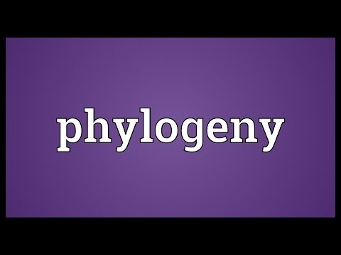 Phylogeny Meaning