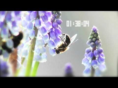 O2 & NEJA Walking on a dream (vocal mix)