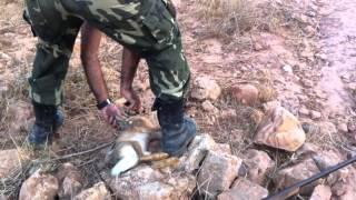 la chasse au maroc 10/11/2013