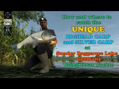 Fishing Planet [ Unique Silver & Bighead Carp Guide ] Sander Baggersee Lake  Germany