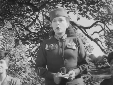 Tawny Pipit (1944)