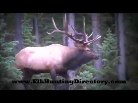 Guided Elk Hunts Gunnison Colorado