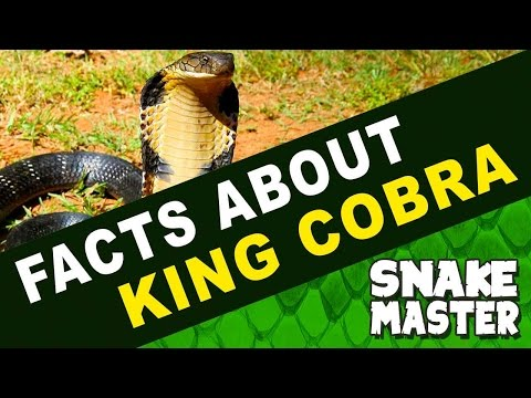 Repeat King Cobra Facts and Information videos | Vava Suresh