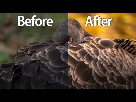 Lightroom cc 2017 Wildlife Photography Editing Tutorial - From The RAW File To The Finished Photo!