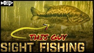 Sight Fishing Tricks for Bass Fishing in the Spring