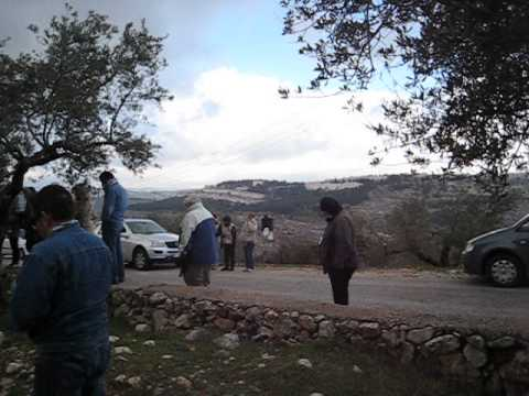 The Lord's Prayer, in a Palestinian Olive grove