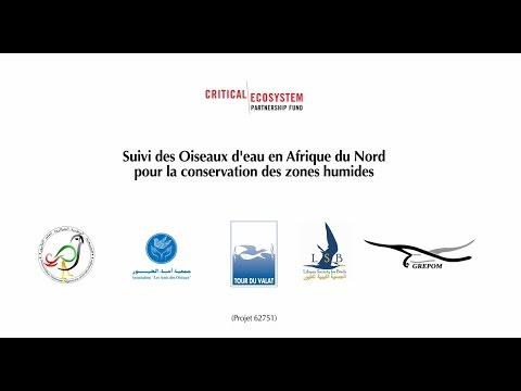 Projet Suivi des oiseaux d'eau en Afrique du Nord pour la Conservation des Zones Humides