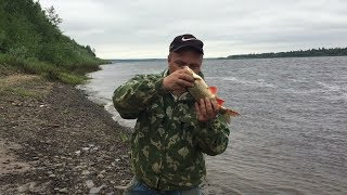 Незапланированный выезд на рыбалку / Рыбалка на закидушки / Рыбалка на донки / Рыбалка в Коми