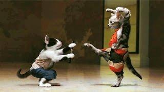 Поединки животных. И СМЕХ, И ГРЕХ :))